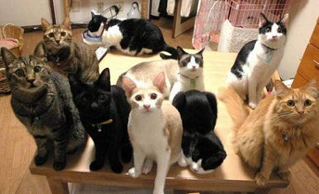 Hey! Crazy Cat Lady! Where's Are Food!