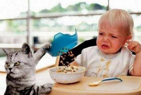 You Eat This Crap Kid I'm Going After The Human Food