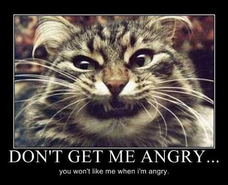 I Didn't Know Cats Had PMS