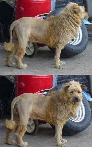 Redneck Lion.  A Shop Owner Was Frustrated by A String Of Break-ins. Here Is His Solution