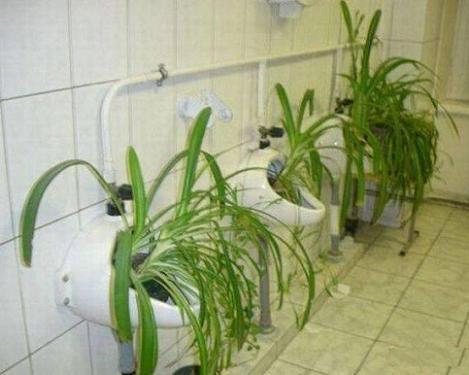 Fertilize This!