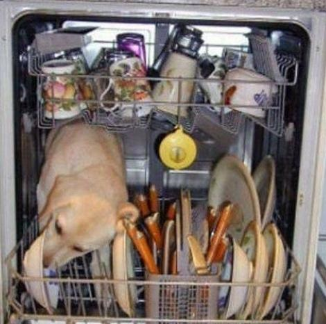 But You Said To Scrap The Dishes Before Putting Them In The Dishwasher