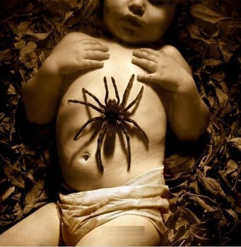 I Don't Know Why People Are Afraid Of Spiders I've Always Liked Them...I Wonder Why