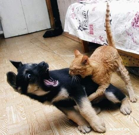 I Warned You Not To Mess With Me Snoopy!