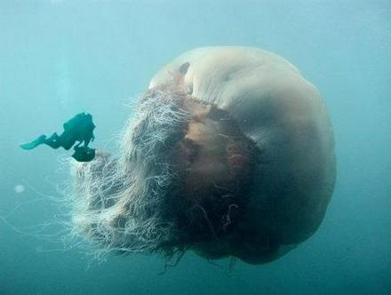 I Wouldn't Swim That Close To That Jellyfish If I Were You