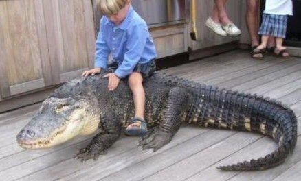 Look Daddy Free Crocodile Rides!