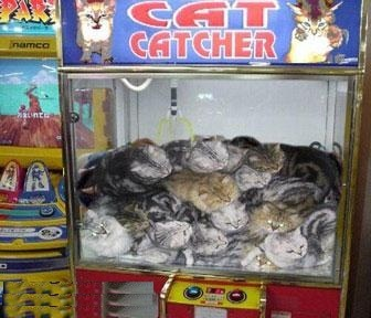 Play The Cat Catcher Game