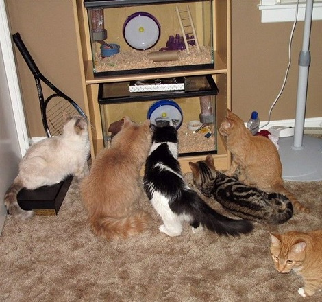Ok The Human's Are Gone, Who Wants' Tail On Theirs