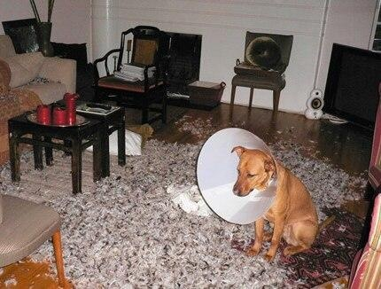 the-dogs-revenge
