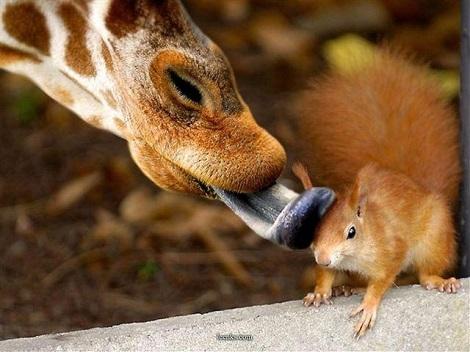 thats-it-you-dumb-giraffe-im-filing-a-restraining-order