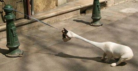 For The Last Time I Hate This Damn Leash!