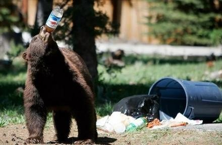 Pepsi, The Choice of A Bear Generation