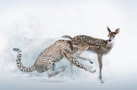 Why Being The Fastest Animal In The World Isn't Always A Good Thing