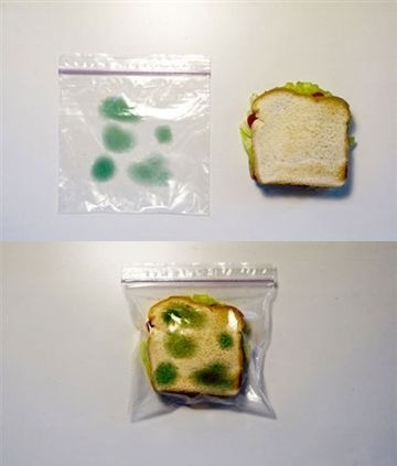 Tired Of People Eating Your Lunch Out Of The Office Refrigerator Try Our New Theft Proof Sandwich Bags!