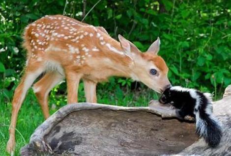 Watch It Bambi