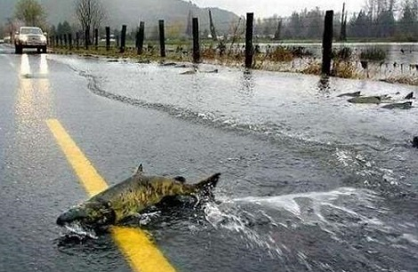 Flodded Roadkill