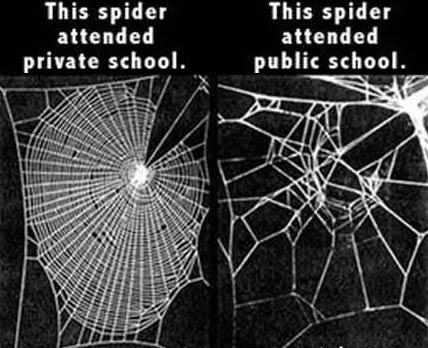 The Private School Spider Also Had Better Drugs