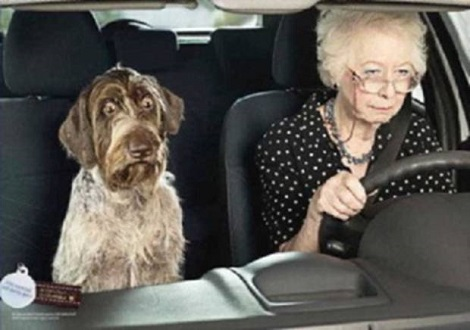 You Know It's Time To Hang Up The Car Keys When Your Dog Has This Look On His Face