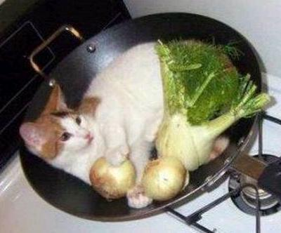 I Love Cat's Honey, With A Few Vegetables There Delicious!